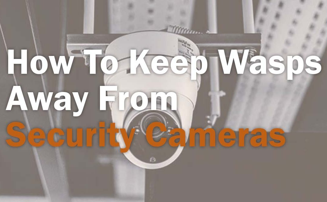 How To Keep Wasps Away From Security Cameras